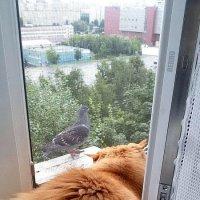 Близок голубок, а ... :: Владимир Волик