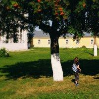 когда деревья были большими... :: BioJ .