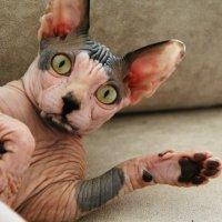Что значит не мой диван! :: Натали Пам