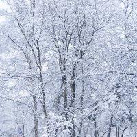 воспоминания о зиме :: Елена