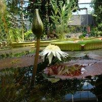 В Ботаническом саду Аугсбурга -водяное чудо... :: Galina Dzubina