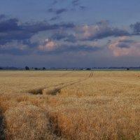 Колосится поле пшеничное... :: *MIRA* **