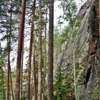 Национальный парк «Реповеси». Скалы. Сосны :: Елена Павлова (Смолова)