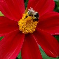 На красивом цветке.. :: Антонина Гугаева