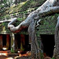 Ангкор город забытый в джунглях!!! :: Вадим Якушев