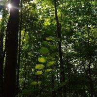 Лучи солнца с трудом пробиваются сквозь деревья. :: Татьяна Помогалова