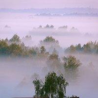 ранний туман :: Богдан Вовк