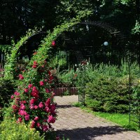 Вьющиеся розы на решётчатых арках. :: Татьяна Помогалова