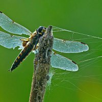 Макросъёмка насекомых :: Анатолий Иргл