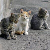 Три котенка под окном. :: Стас