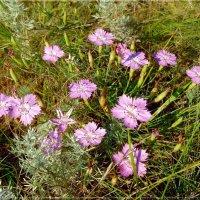Цветы луговые. :: Чария Зоя