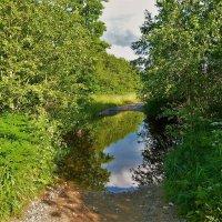 Дорога к Мегленскому озеру... :: Sergey Gordoff