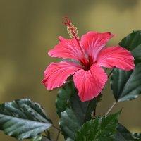 Цветы на подоконнике. :: *MIRA* **