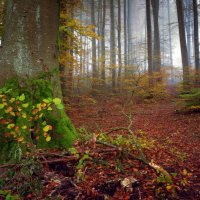 в осеннем лесу :: Elena Wymann