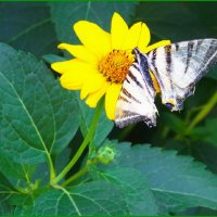 Бедная бабочка с оборванными крыльями......... :: Любовь К.