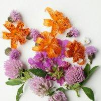 Полевые цветы :: IURII