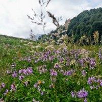 Красная поляна. Западный Кавказ :: Tata Wolf