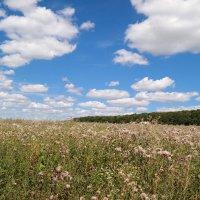 Кусочки облаков спустились на поля.. :: Андрей Заломленков