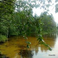 Лето в Карелии :: Наталья