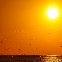 Солнце,море,чайки.... :: владимир