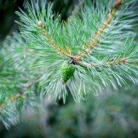 молодо зелено.. :: ruslic hodjaev