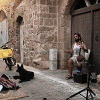 Уличный музыкант. Яффо. :: Tatyana Belova