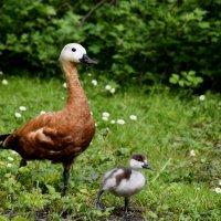 С правой ноги, бегом марш мимо этой тётеньки, сынок!!! :: Катерина Клаура