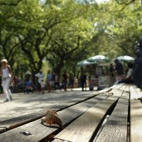 В парке :: Константин Подольский