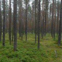 ароматы леса после дождя :: Михаил Жуковский