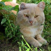 Рыжий кот под скамейкой :: Владимир Анакин