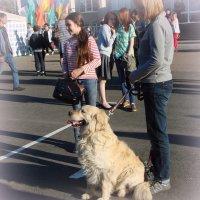 Даже собаки улыбаются... :: Глеб Битёв