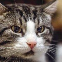 Мой кот Марсик :: Наталья Верхотурова
