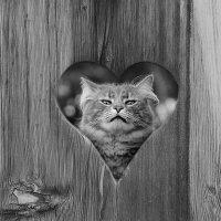 Одинокое сердце :: Sergii VIdov