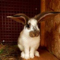 Кролик :: Андрей Лавров