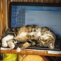 Кошка вместо мышки :: Евгений Кожухов
