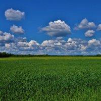 Русское поле... :: Sergey Gordoff