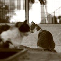 ...когда кошки скребут на душе :: Александра
