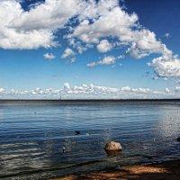 На берегу Финского залива. :: Larisa