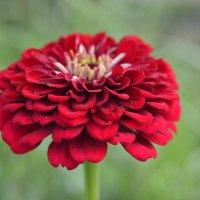 цветок :: Наталия Кожанова