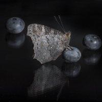 Черное на черном :: Валерий Чернов