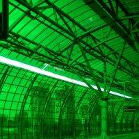 Зелёный цвет полезен для глаз :: Tanja Gerster