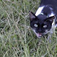 Полудикая турецкая кошка :: ID@ Cyber.net