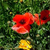 Городские цветы :: Нина Бутко