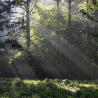 Утро на поляне.... :: Юрий Цыплятников