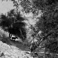 Невыносимая жара :: Рамиль Ахметов