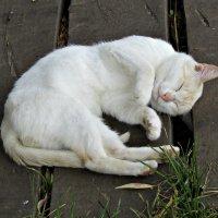 Котик :: наталия