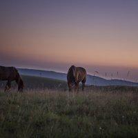 лошади на рассвете :: Анна Брацукова