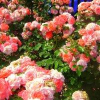 Розы на тортик :: Марина Домосилецкая