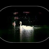 Лебединая песня :: Nikolay Monahov