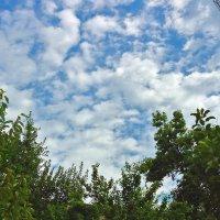 Облака... в августе... в Ташкенте... - редкое явление :: Светлана